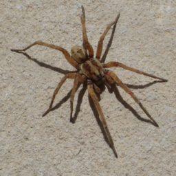 Уничтожение пауков в Анапе